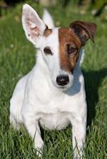 Fox Terrier Dog Journal