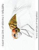 In the Garden of Dragonflies [Line Drawings] af Tiffany Skora