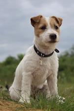 Jack Russell Terrier Dog Journal