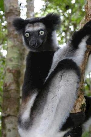 Bog, paperback Indri Lemur Journal af Cool Image