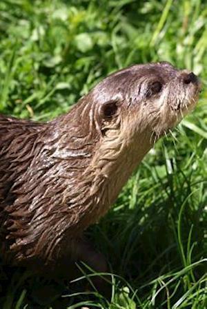 Bog, paperback An Otter Looking for Food in the Grass af Unique Journal
