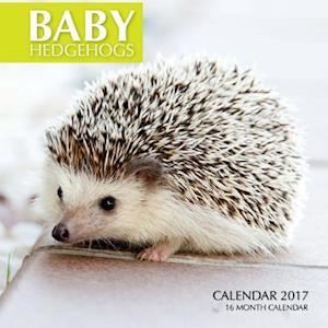 Bog, paperback Baby Hedgehogs Calendar 2017 af David Mann