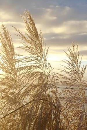 Japanese Silver Grass at Sunset Journal