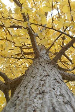 Yellow Leaves on a Gingko Tree in Autumn