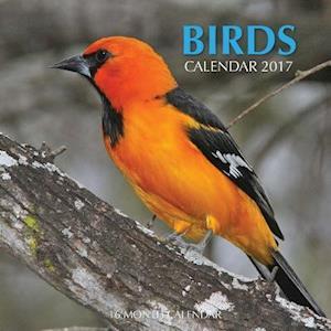 Bog, paperback Birds Calendar 2017 af David Mann