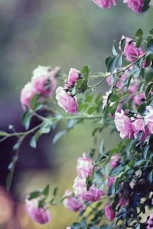 Bog, paperback Pink Garden Roses in Spain af Unique Journal