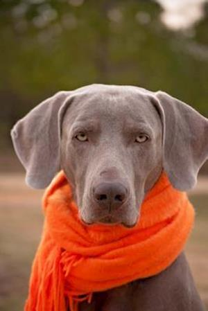Weimaraner Dog with an Orange Scarf Journal