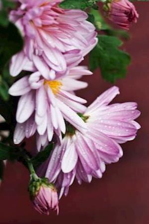Lilac Chrysanthemum Flower Journal