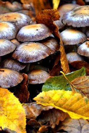Bog, paperback Hunting Mushrooms in the Forest Journal af Cs Creations