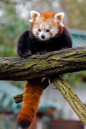 Bog, paperback Red Panda Animal Journal af Cs Creations