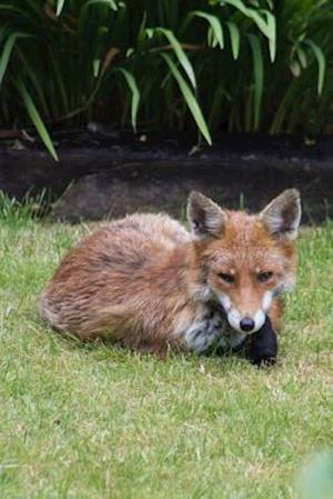 Bog, paperback Resting Fox Animal Journal af Cs Creations