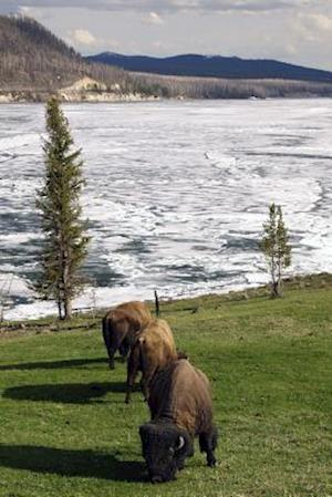Bog, paperback Bison in Yellowstone National Park Journal af Cs Creations