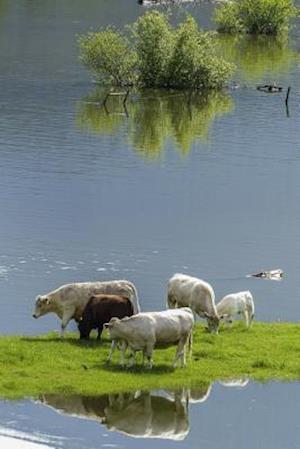 Bog, paperback Cows on an Island in the Pond af Unique Journal
