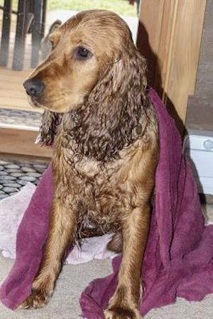 Bog, paperback Cocker Spaniel Just Out of the Bath, for the Love of Dogs af Unique Journal