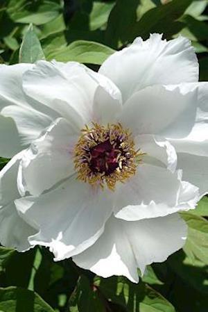 Bog, paperback White Peony Flower Journal af Cs Creations