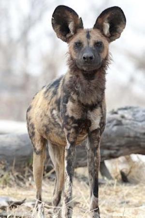 Bog, paperback African Wild Dog Journal af Cool Image