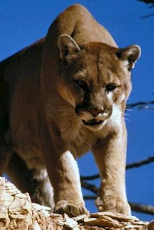 Bog, paperback Angry Mountain Lion Journal af Cool Image