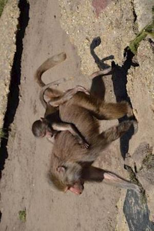 Bog, paperback Baboon Gets a Piggyback Ride Journal af Cool Image