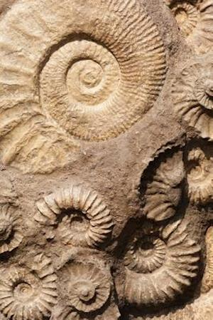 Fossils in the Rocks Journal
