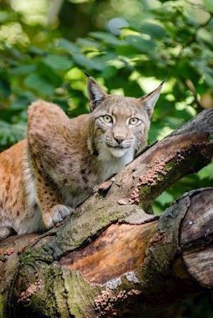 Bog, paperback Bobcat in a Tree Journal af Cool Image