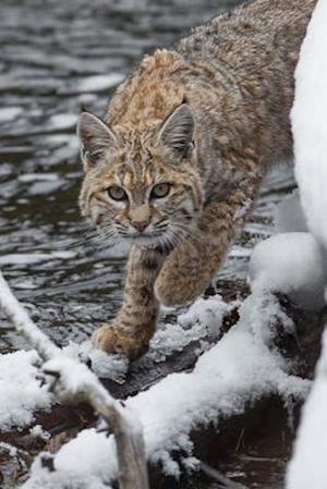 Bog, paperback Bobcat on the Prowl Journal af Cool Image