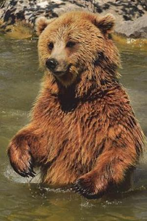 Bog, paperback Brown Bear Standing in the River Journal af Cool Image