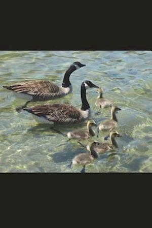 Bog, paperback Family of Canadian Geese and Goslings Journal af Cool Image