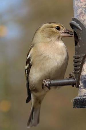 Bog, paperback Chaffinch Perched on a Bird Feeder af Unique Journal