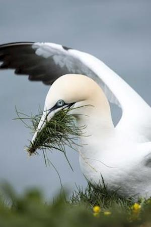 Bog, paperback Gannet Putting Together a Nest by the Shore af Unique Journal