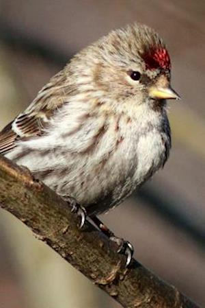 Bog, paperback Redpoll Perched on a Branch, Birds of the World af Unique Journal