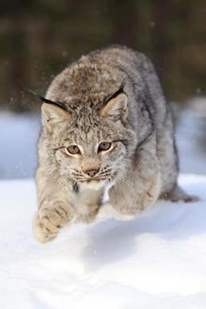 Bog, paperback Leaping Bobcat Journal af Cool Image