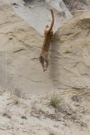 Bog, paperback Leaping Mountain Lion Journal af Cool Image