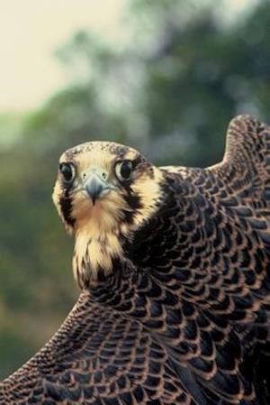 Bog, paperback Peregrine Falcon Portrait Journal af Cool Image