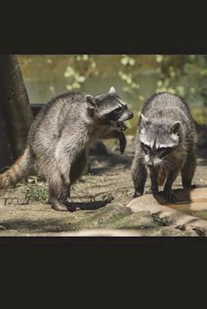 Bog, paperback Raccoons at Play Journal af Cool Image