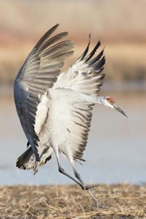 Bog, paperback Sandhill Crane Coming in for a Landing Journal af Cool Image