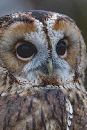 Bog, paperback Say Hello to the Barred Owl Journal af Cool Image