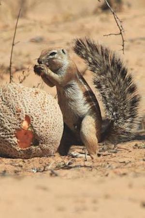 Bog, paperback Cape Ground Squirrel Journal af Cool Image