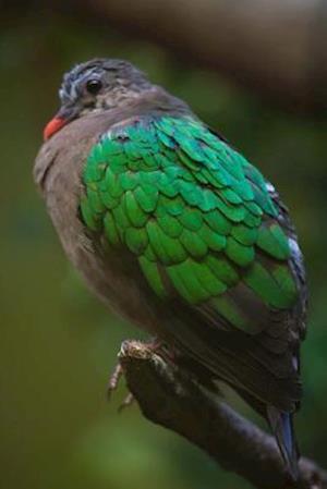 Bog, paperback Common Emerald Dove Journal af Cool Image