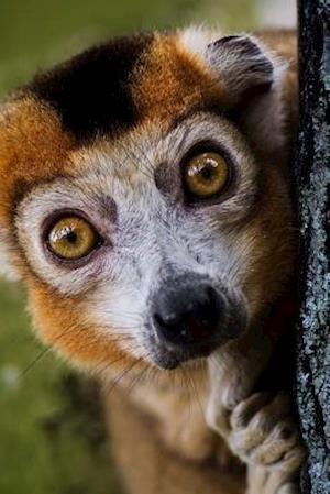 Bog, paperback Crowned Lemur Checking You Out Journal af Cool Image