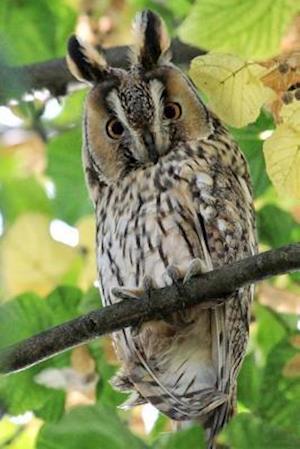 Bog, paperback Long Eared Owl Bird Journal af Cs Creations