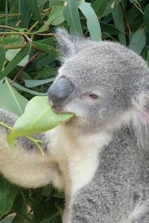 Bog, paperback Koala Eating Eucalyptus Leaves Journal af Cool Image