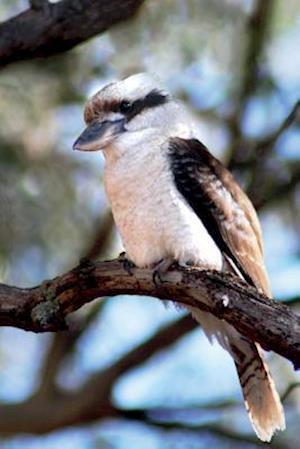 Bog, paperback Kookaburra Bird Journal af Cool Image