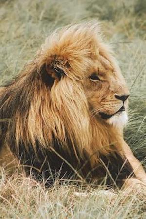 Bog, paperback Living the Life of a Lion Journal af Cool Image