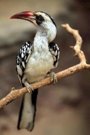 Bog, paperback Northern Red-Billed Hornbill Bird Journal af Cool Image