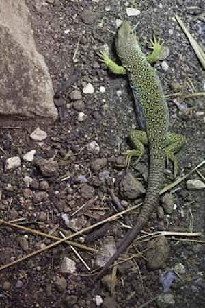 Bog, paperback Ocellated Lizard Aka Jeweled Larcarta Journal af Cool Image
