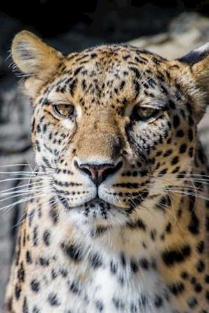 Bog, paperback Persian Leopard Portrait Journal af Cool Image