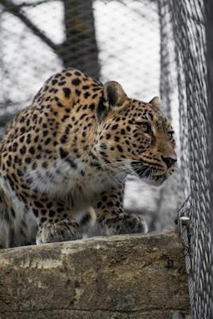 Bog, paperback Persian Leopard Journal af Cool Image