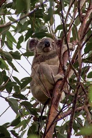 Bog, paperback Queensland Koala Journal af Cool Image
