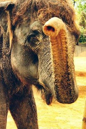 Bog, paperback Say Hello to the Indian Elephant Journal af Cool Image