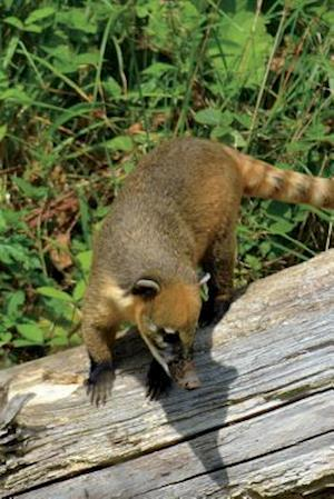 Bog, paperback South American Coati Aka Ring-Tailed Coati Journal af Cool Image
